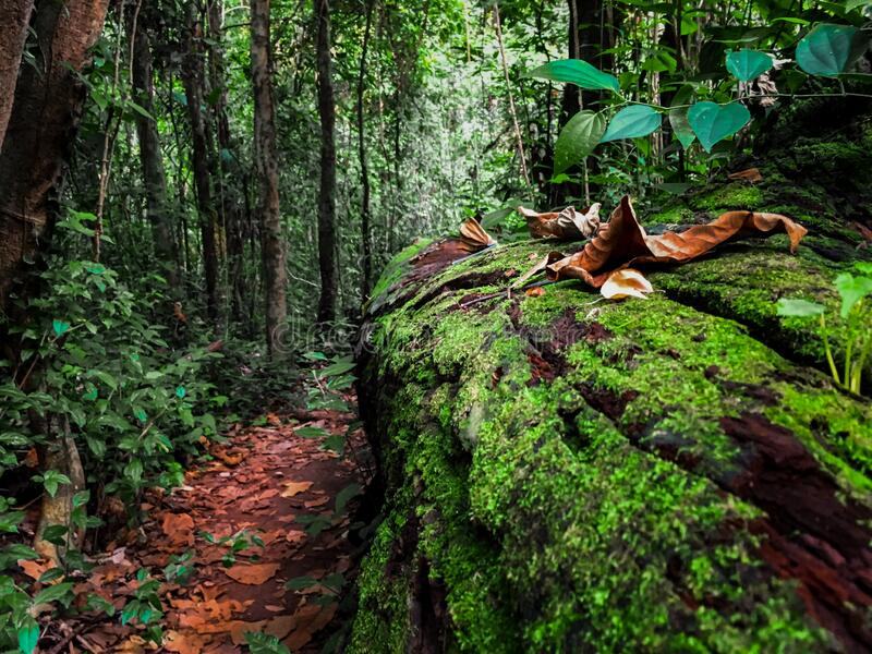 Sunlit nature path. royalty free stock photos