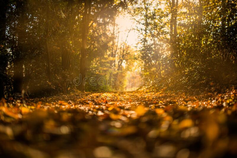 Sunlit path through forest royalty free stock images