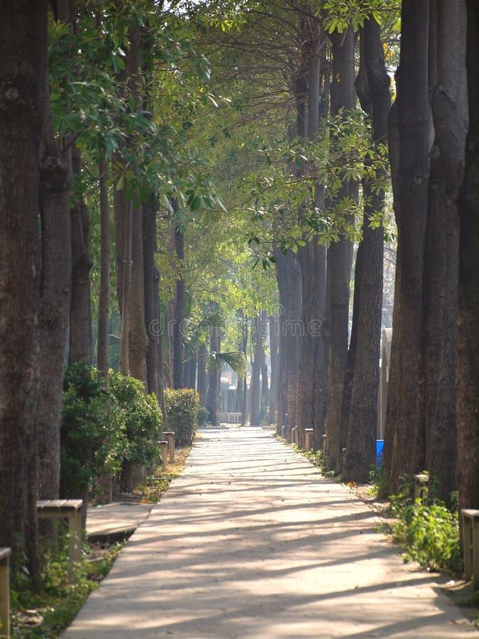 Sunlit Pfad im Park lizenzfreie stockfotografie