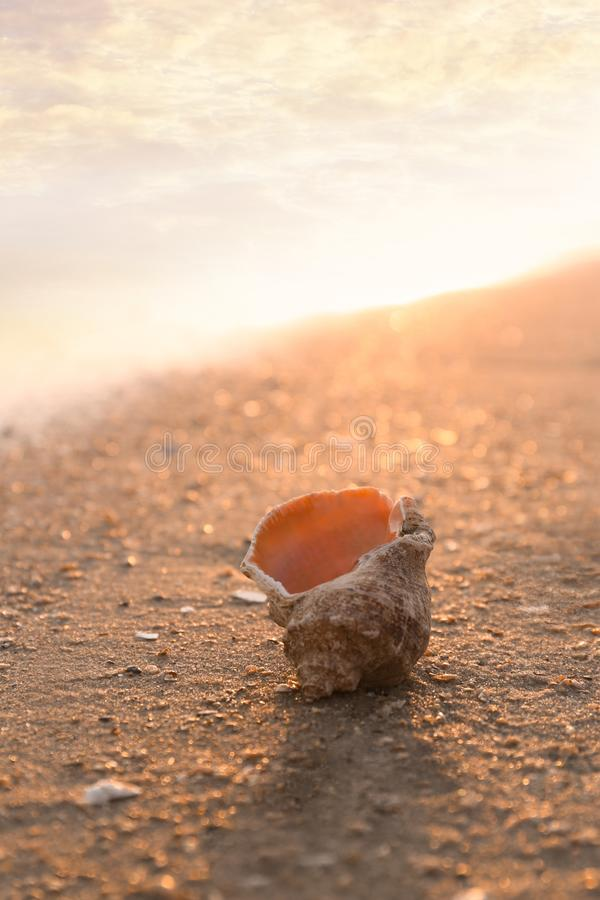 Sunlit sandy beach with beautiful seashell on summer day. Space for text royalty free stock photos