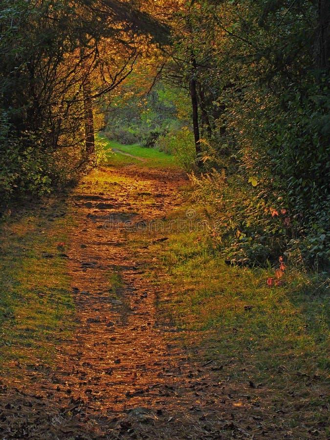 Sunlit skogbana royaltyfri foto