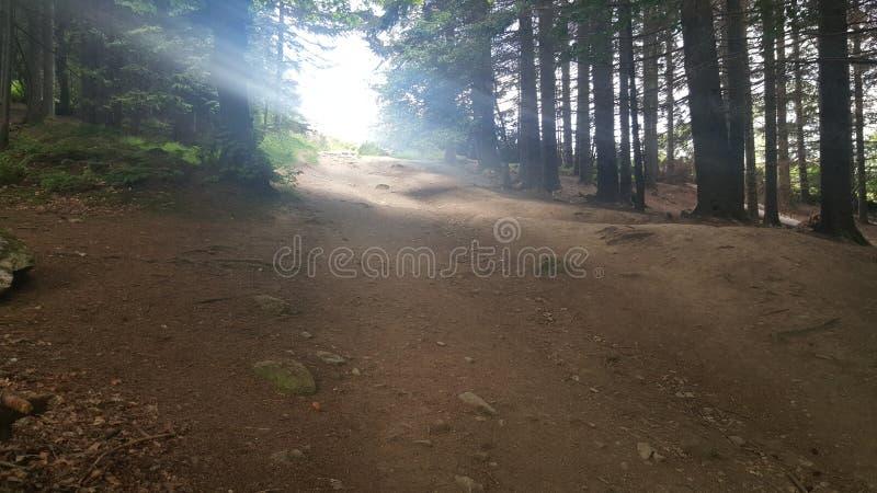 Sunlite stupefacente in una passeggiata alla cima della collina fotografia stock