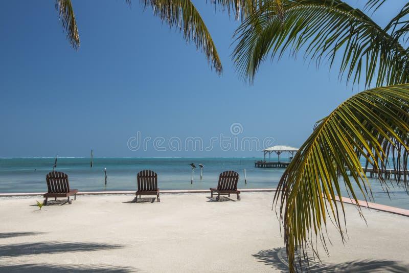 Sunloungers palm tree Caye Caulker Belize stock photo