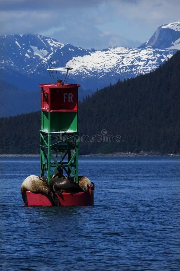 Sunning Sea Lions royalty free stock image