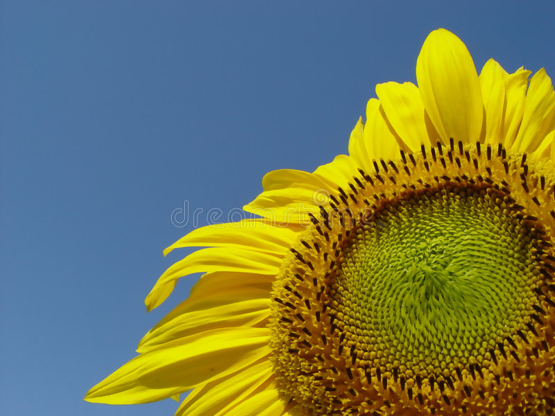 Download Sunny stock image. Image of green, cheery, blue, yellow - 10955