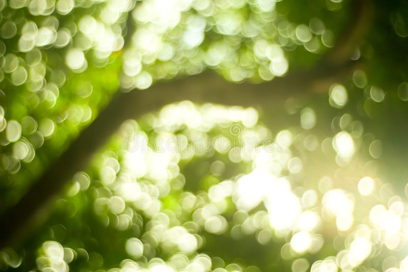 Sunny abstract green nature background, Blur park with bokeh light , nature, garden, spring and summer season.  stock photos
