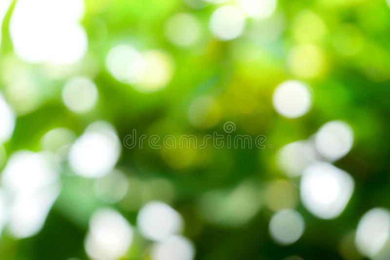 Sunny abstract green nature background, Blur park with bokeh light , nature, garden, spring and summer season.  stock image