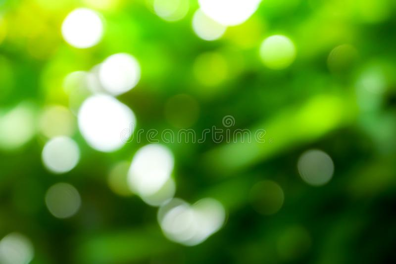 Sunny abstract green nature background, Blur park with bokeh light , nature, garden, spring and summer season.  royalty free stock photo