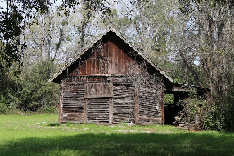 Sunny afternoon abandoned farm barn building overgrown trees royalty free stock photos
