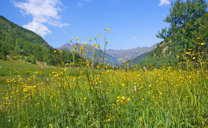 Sunny alpine meadow royalty free stock photography