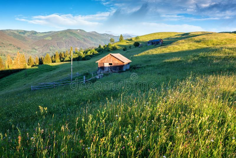 Sunny green alpine meadow, nature summer landscape royalty free stock photography