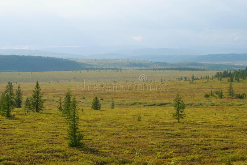 Sunny August-dag in de Yamal-toendra Polair gebied, Rusland royalty-vrije stock afbeelding