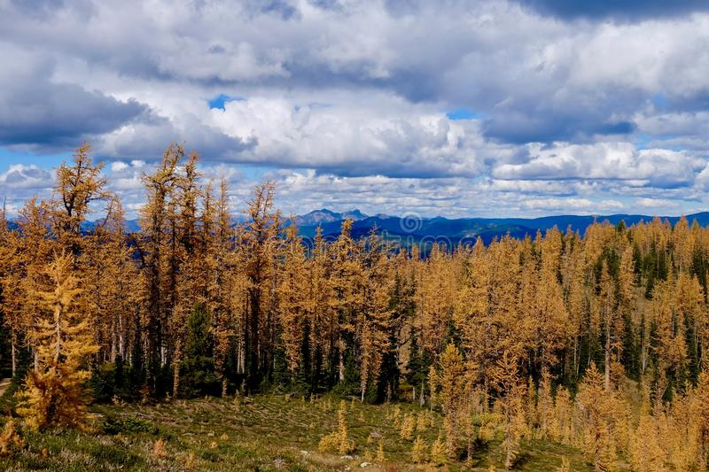 Sunny autumn day in alpine yellow forest. stock photos