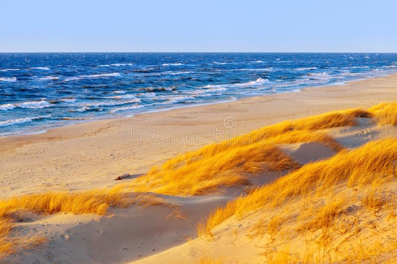 Sunny autumn day on the Baltic sea. Sandy beach, dunes and yellow grass. stock photo