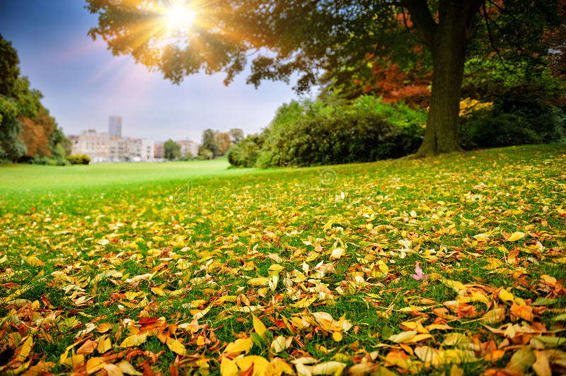 Sunny autumn day in city park stock photography