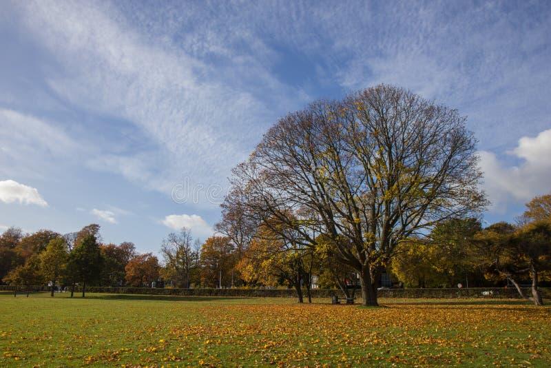Sunny autumn days in park of Copenhagen Area. Denmark royalty free stock photos