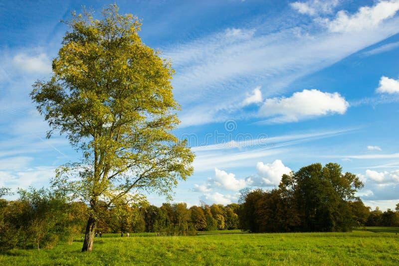 Sunny autumn days in park of Copenhagen Area. Denmark royalty free stock photography