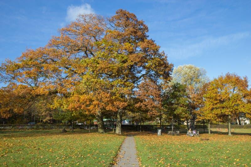 Sunny autumn days in park of Copenhagen Area. Denmark stock images