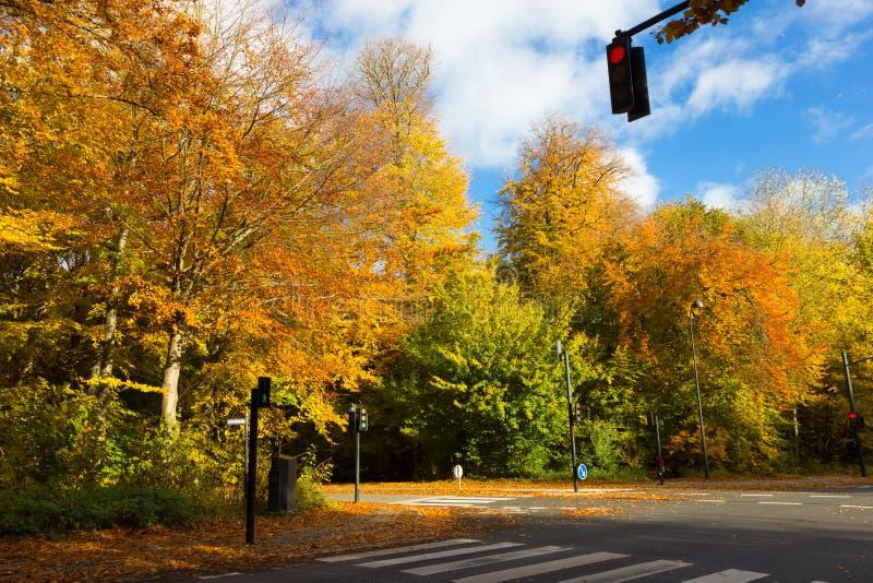 Sunny autumn days in park of Copenhagen Area. Denmark stock photo