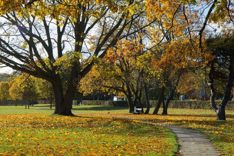 Sunny autumn days in park of Copenhagen Area. Denmark royalty free stock images