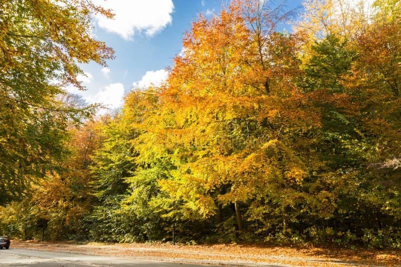 Sunny autumn days in park of Copenhagen Area. Denmark royalty free stock image
