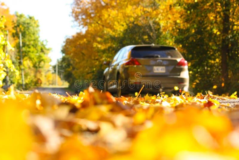 Sunny Autumn Drive Down een Blad Behandelde Landelijke Weg stock afbeeldingen