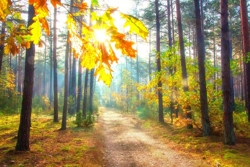 Sunny autumn forest. Amazing forest scene. October bright day in woodland. Scenic fall nature landscape stock image