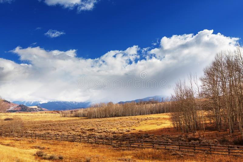 Autumn meadow. Sunny autumn meadow royalty free stock image