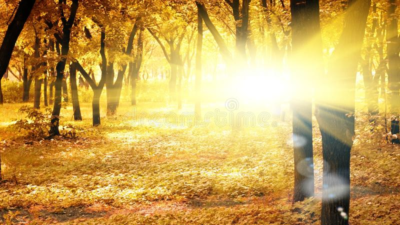 Sunny autumn morning. In peaceful park royalty free stock photos