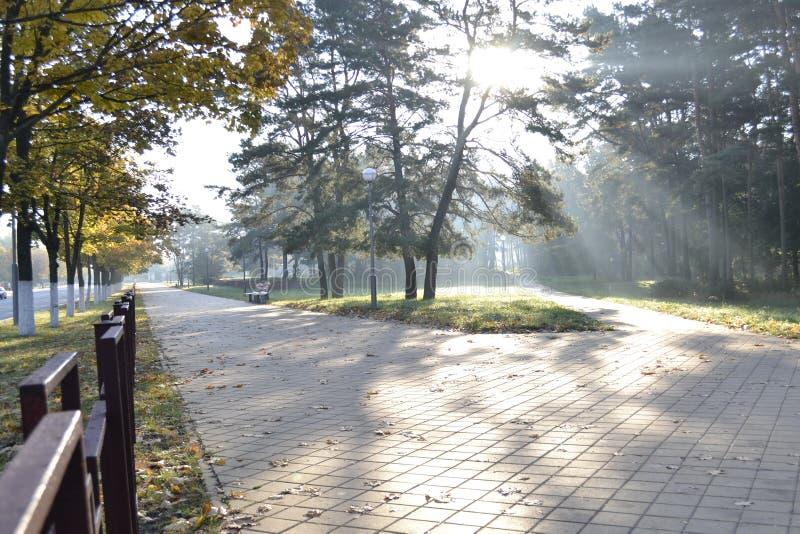 Sunny autumn morning stock photos