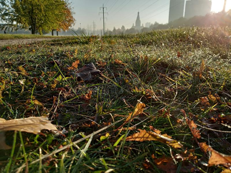 Sunny autumn morning, water drops on leaves, colored carpet of fallen leaves. Green grass with orange leaves and city view royalty free stock photos