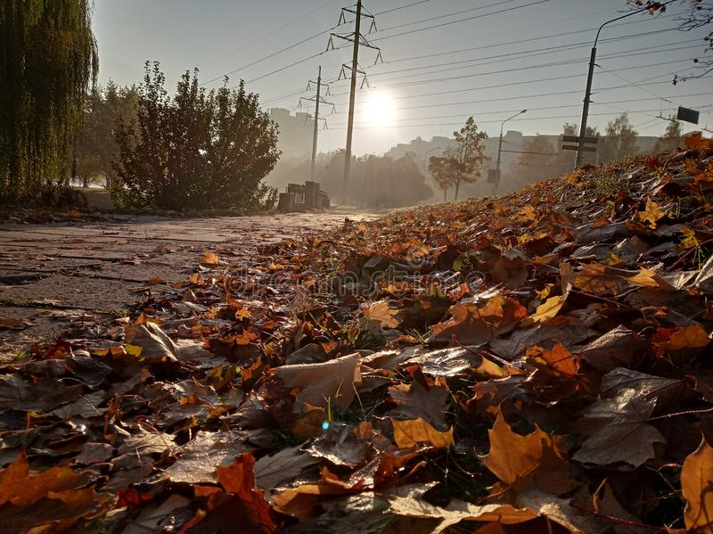 Sunny autumn morning, water drops on leaves, colored carpet of fallen leaves on ground. royalty free stock image