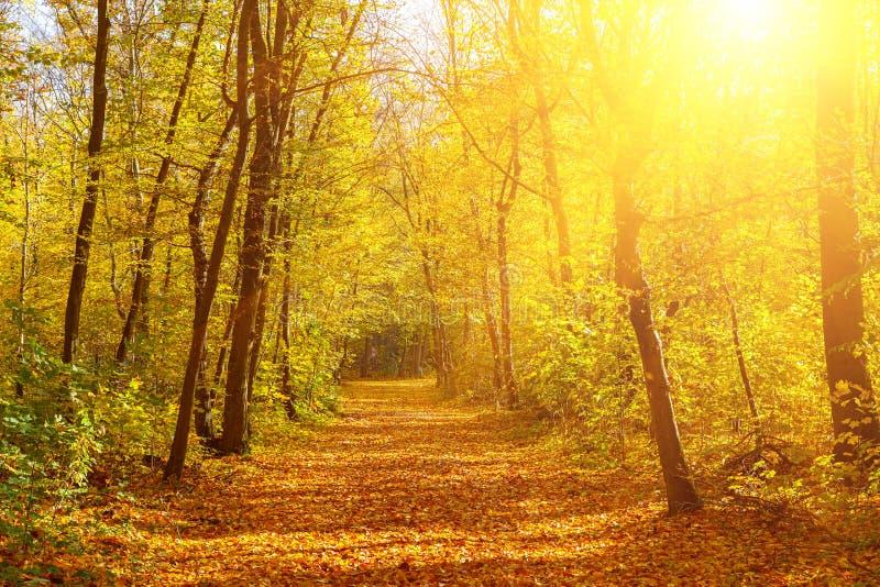 Download Sunny Autumn Park Stock Photos - Image: 33685943