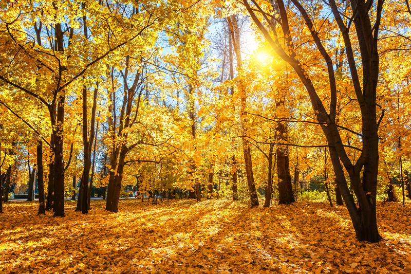 Sunny autumn in the park stock images