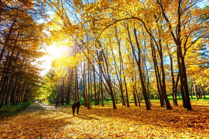 Sunny autumn in the park royalty free stock photos