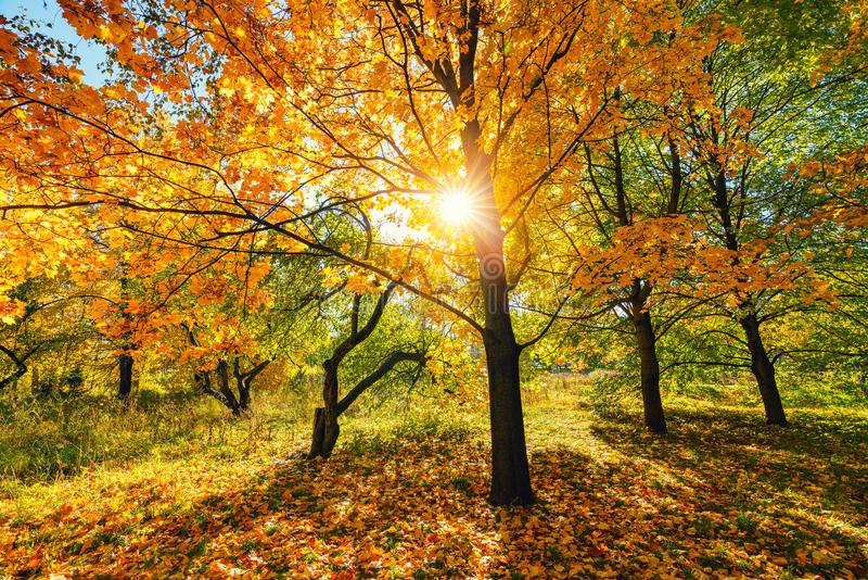 Sunny autumn in the park royalty free stock images