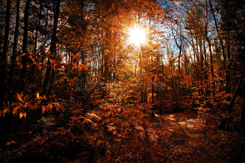 Sunny Autumn royalty free stock photo