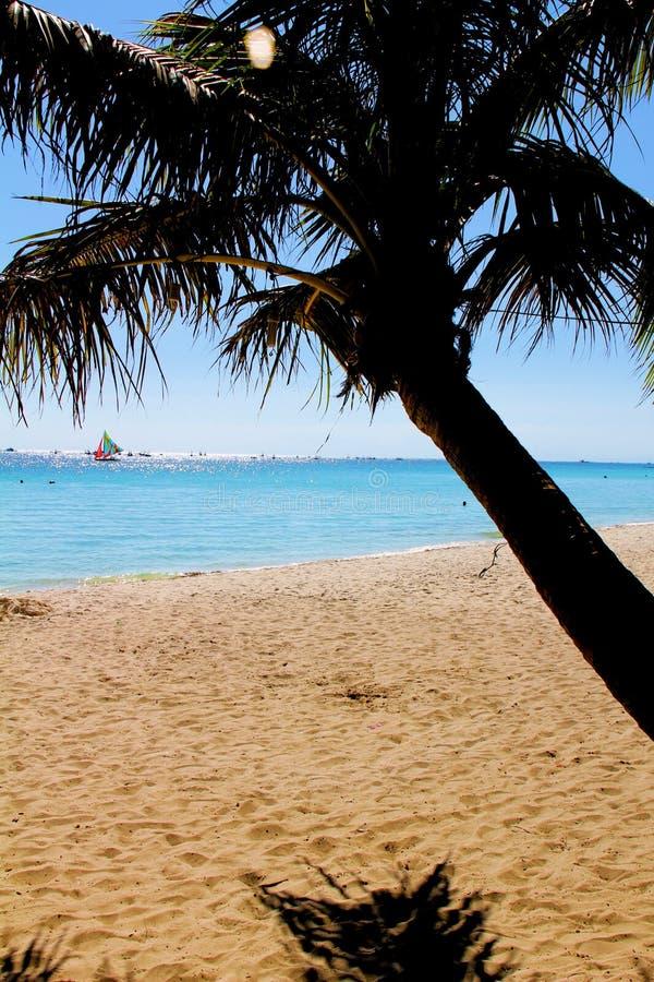 Sunny Beach und Ozean mit Segelboot- und Palme lizenzfreie stockbilder