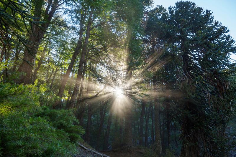 Sunny beams royalty free stock images