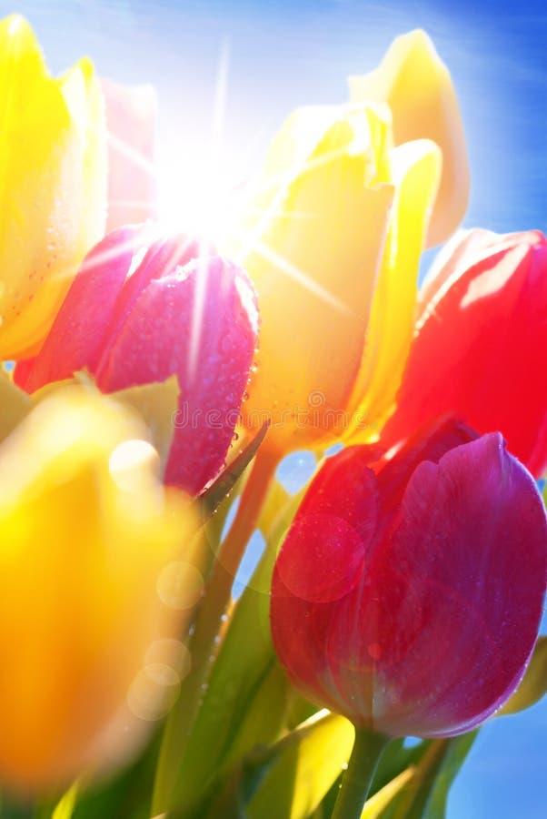 Sunny Blue Sky With Bouquet av Tulip Flowers arkivbild