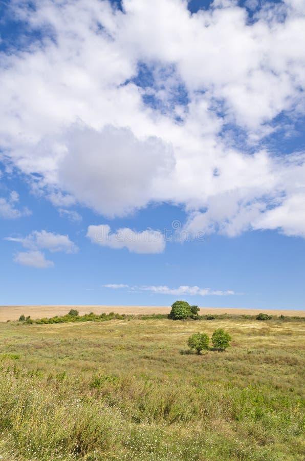 Sunny Blue Sky, prado y un árbol imágenes de archivo libres de regalías