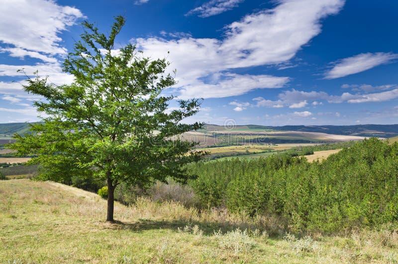Sunny Blue Sky, prado y un árbol fotografía de archivo libre de regalías