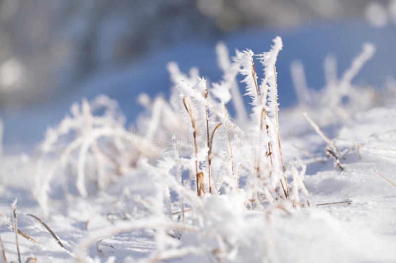 Sunny blurred frosty grass covered with frost royalty free stock photos