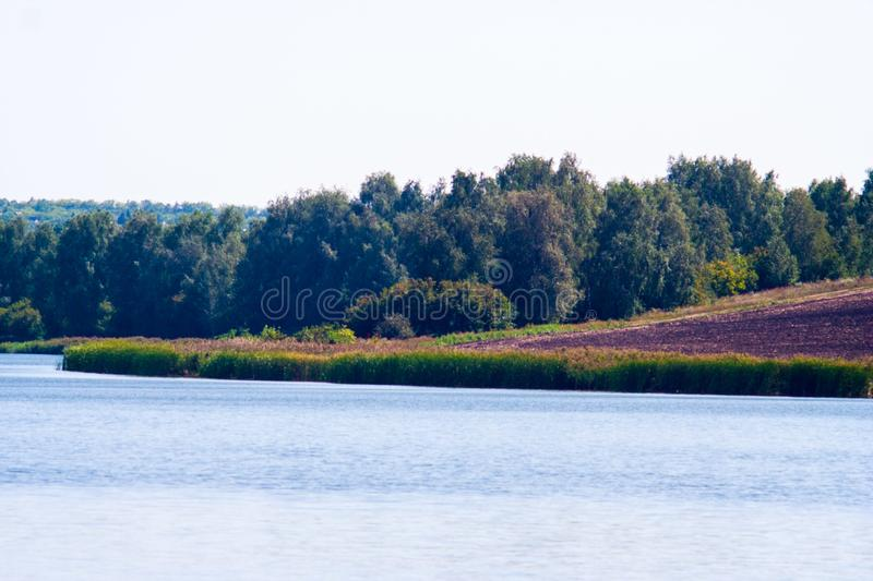 August calm lake. Sunny cloudless day in August, a calm lake, a plowed field, green trees and reeds on the opposite shore of the lake stock images
