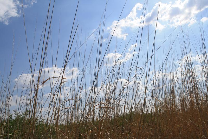 Sunny, clouds, prairie grass, spring, summer stock images