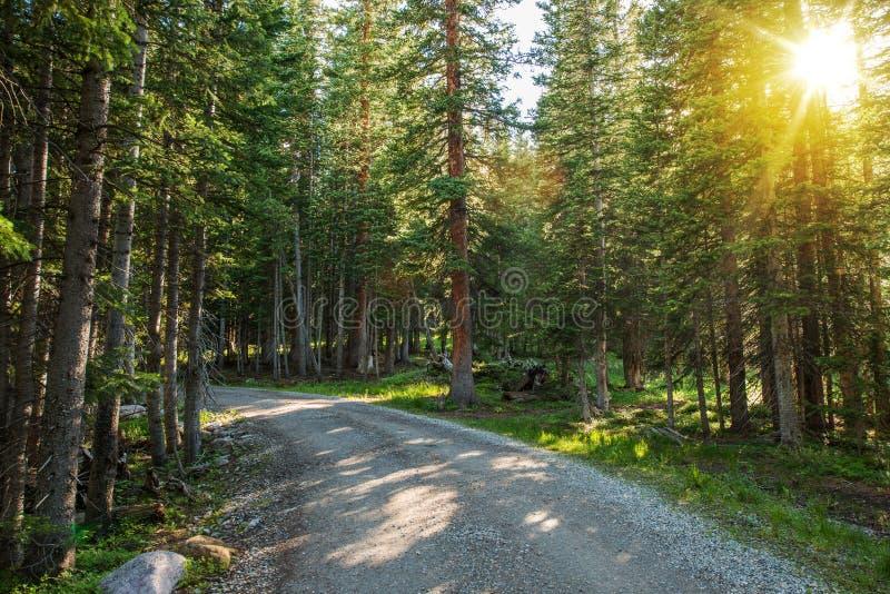 Sunny Colorado Forest Road fotografie stock libere da diritti