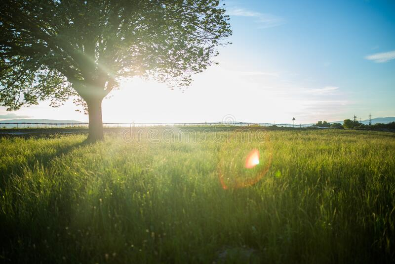 Sunny country field stock photo