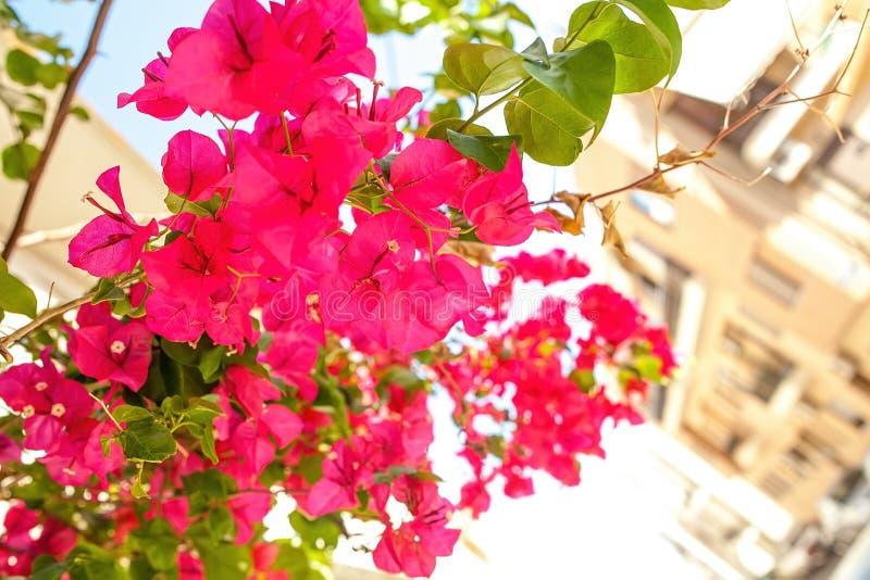Sunny Creete stock afbeelding