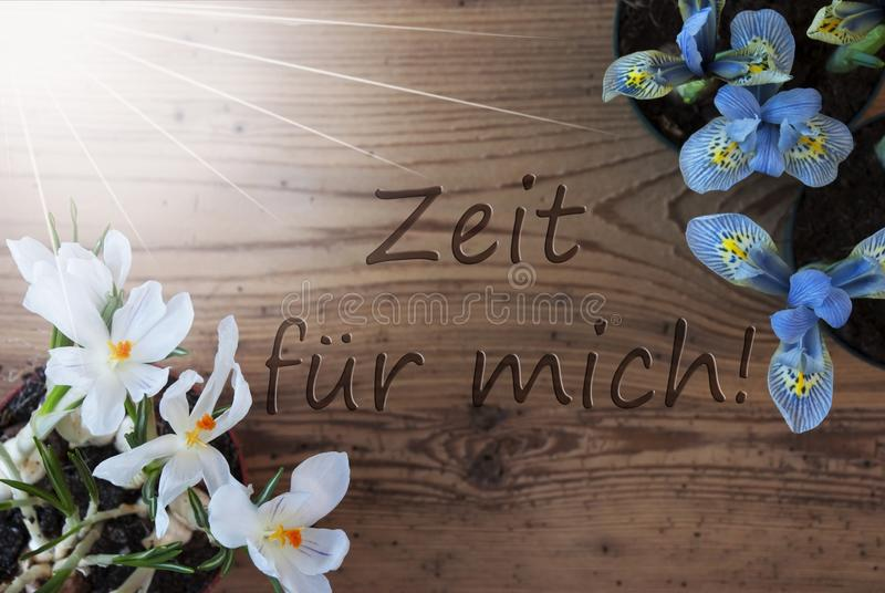 Sunny Crocus hyacint, Zeit Fuer Mich hjälpmedel Tid för mig royaltyfri fotografi