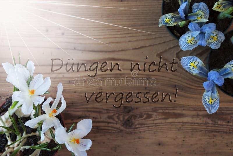 Sunny Crocus hyacinten, Duengen Nicht Vergessen hjälpmedel glömmer inte dynga royaltyfria foton